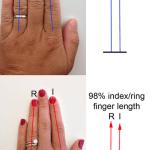 薬指が長いか?人差し指が長いか?でわかる男女の性能「二本指の法則―あなたの健康状態からセックスまでを語る秘密の数字 」
