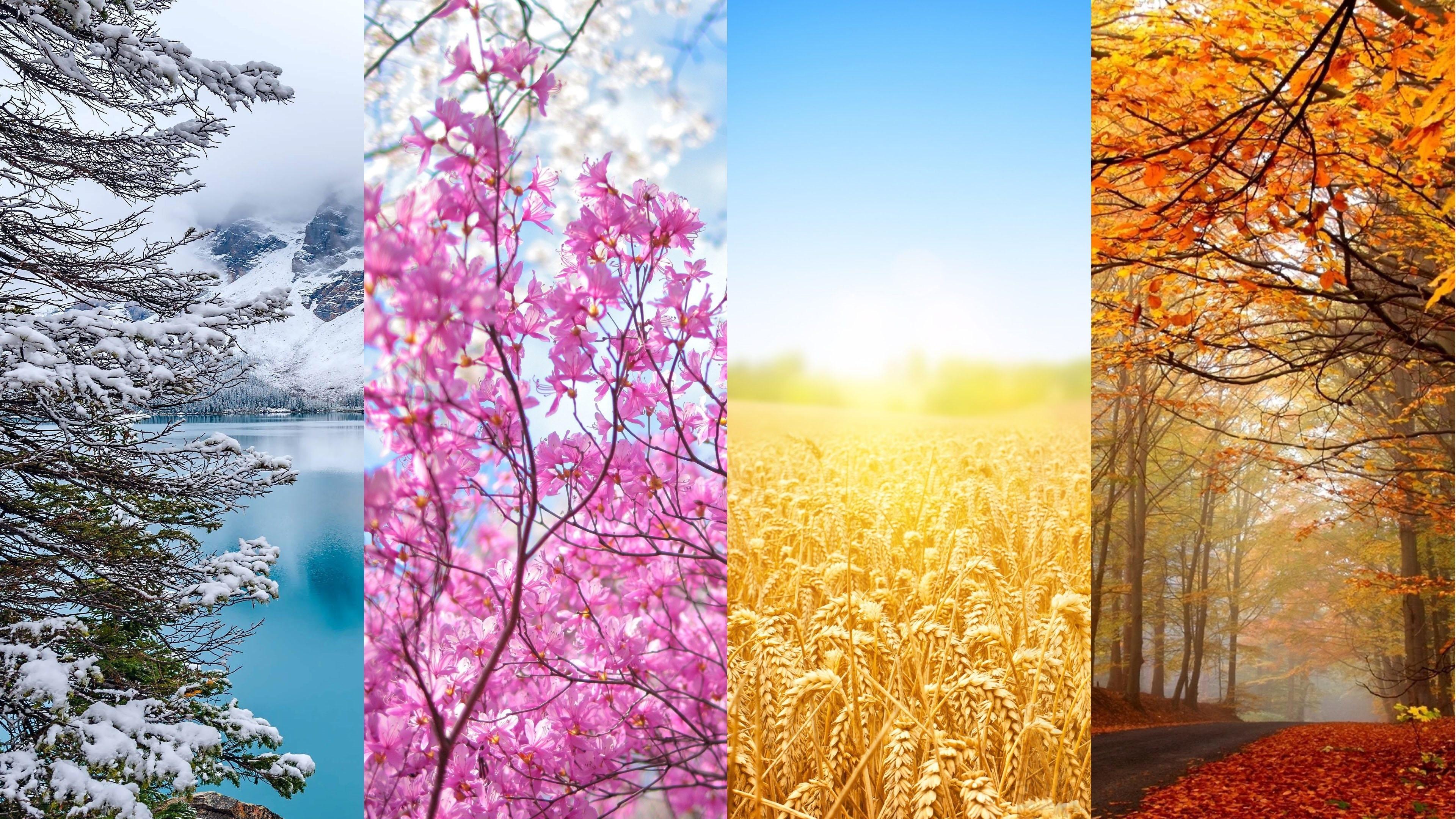 Four Seasons Wallpapers