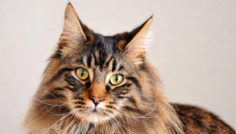 dospievajúci mačička zadarmo Pics