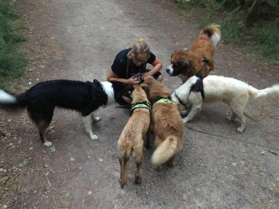 groupe-positif-dressage-pension-canine-chien-rennes-35-2