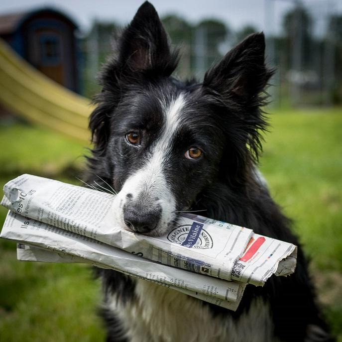 Actualités 4 Pattes en Eventail Dressage chien près de Rennes