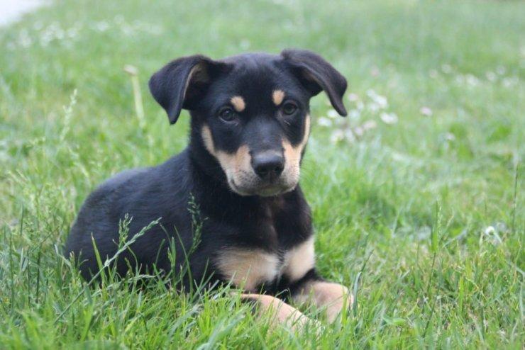 positiv og tvangsfri hundetræning