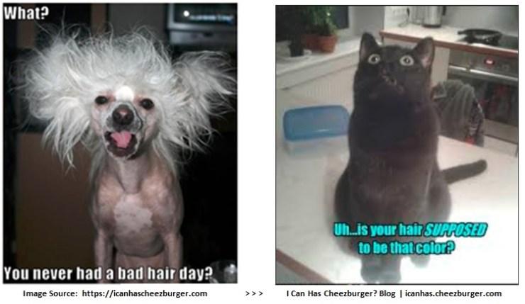pic-dog_cat