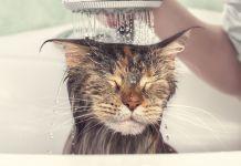 Katzenbad
