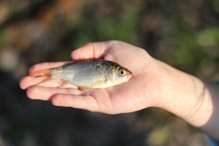Fischfang mit Hand