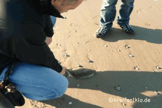 texel-meer-strand-fisch
