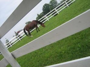 horse green grass