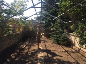greenhouse 4th st