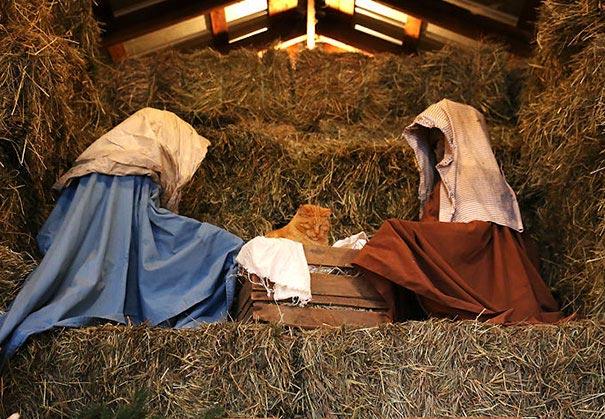 коты разрушившие рождество, кошки в рождественских инсталляциях, кошки испортили рождество, смешные кошки