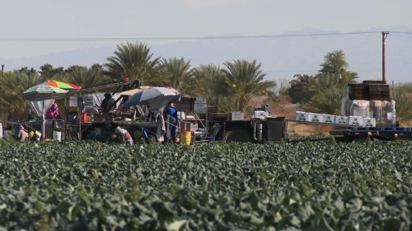 California farmworkers get COVID-19 vaccinations