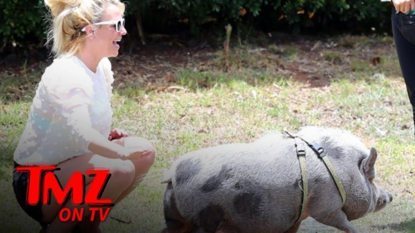 Britney Spears Befriends a Pig While Vacationing in Hawaii | TMZ TV