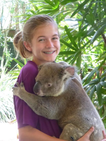 Koala bear Australia