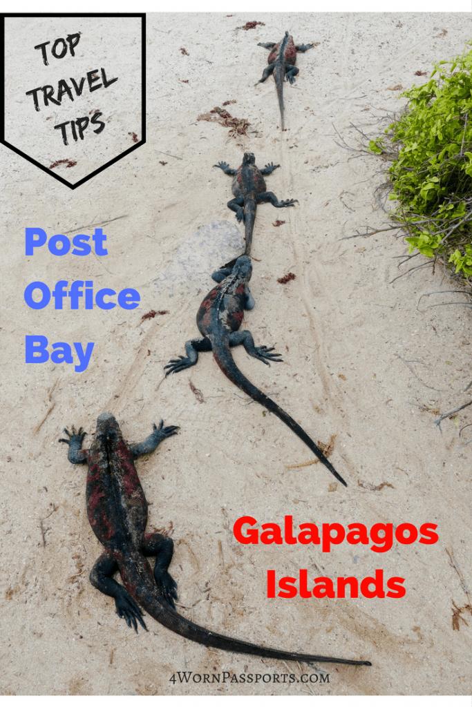 Line of marine iguanas
