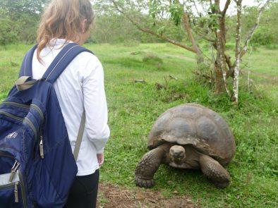 Delaney and tortoise