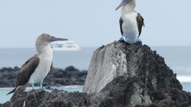 Blue footed boobies Galapagos family trip
