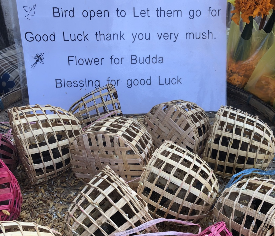 Birds held captive in tiny baskets waiting to be released