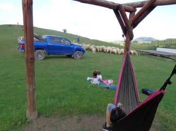 camping with sheeps