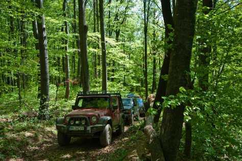 U gustim šumama zaleđa Majdanpeka