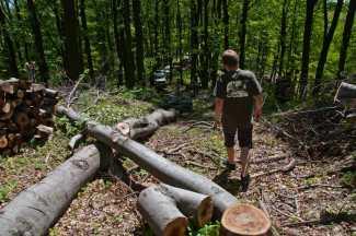 Moramo mi da raščišćavamo iza drvoseča