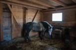 Konji na farmi - na raspolaganju posetiocima
