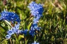 Flowers of Velika Brezovica