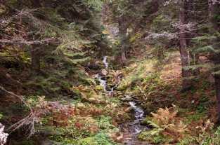 A stream on Pelister