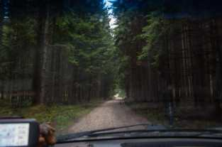 There are pinetrees in places in Kučaj