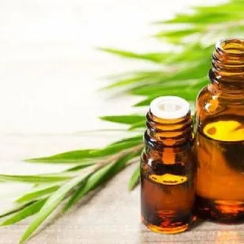 Naturalshifa Tea Tree Essential Oil, Rs 2300 /kilogram Natural ...
