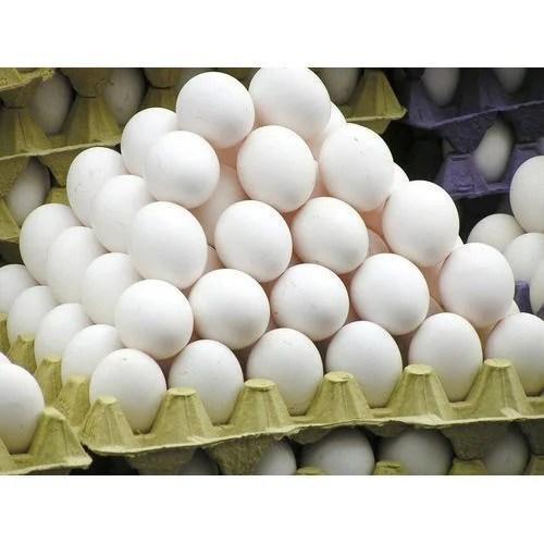 White Eggs, Packaging Type: Egg Tray, Rs 99 /unit S B Enterprises | ID: 15794508262