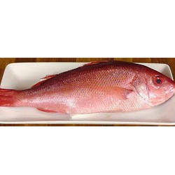 Image result for lane snapper fish 300 x 300