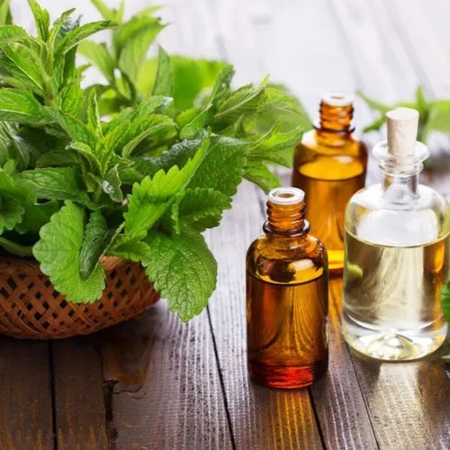 Peppermint Essential Oil at Rs 300/100ml | Kannauj| ID: 20924953030