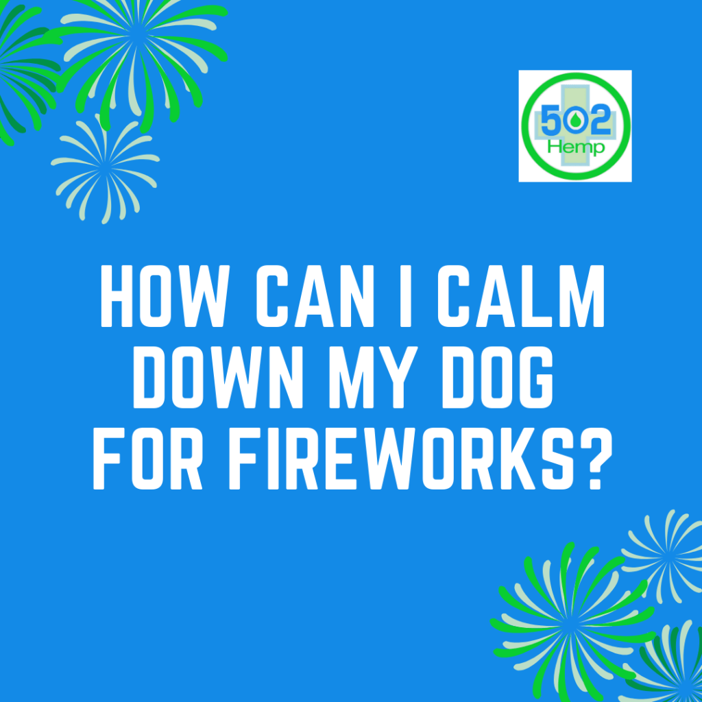 dogs and fireworks what to do