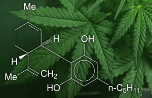 CBD Should Be As Natural as The Plant it Comes From