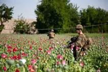 OPI_Soldier Patrols ithe Poppy Fields