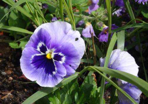 flowerpower6