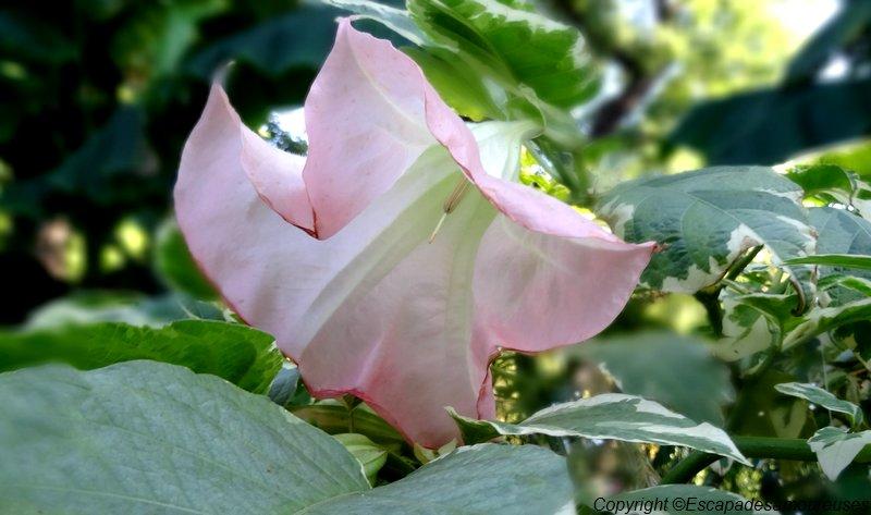 flowerpower32