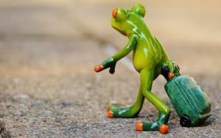 frog farewell travel luggage