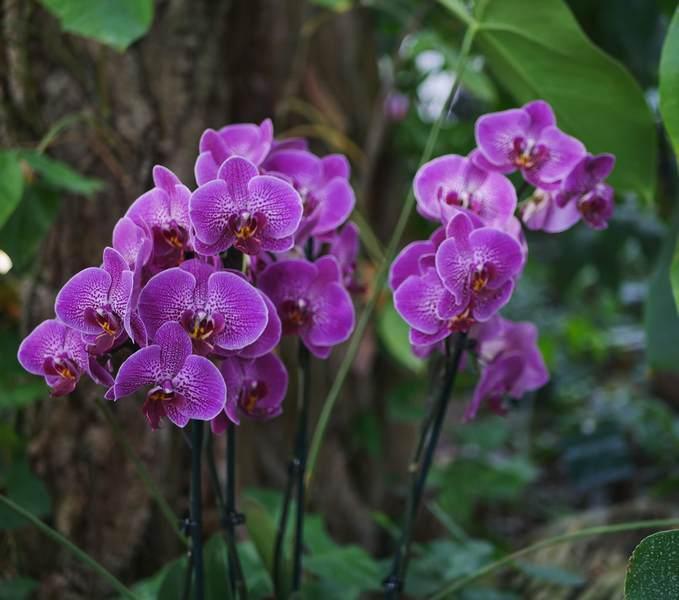 et Tribulationsduneqquinqua orchidees
