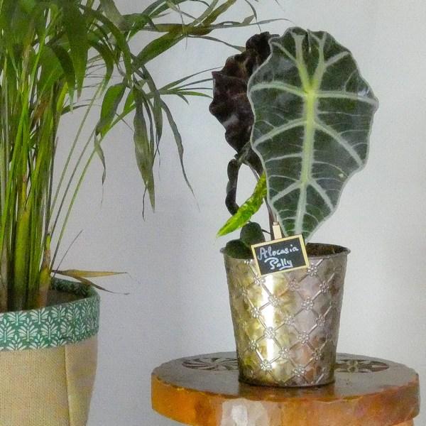 green plant plante verte plante d'intérieur Sojungle decoration
