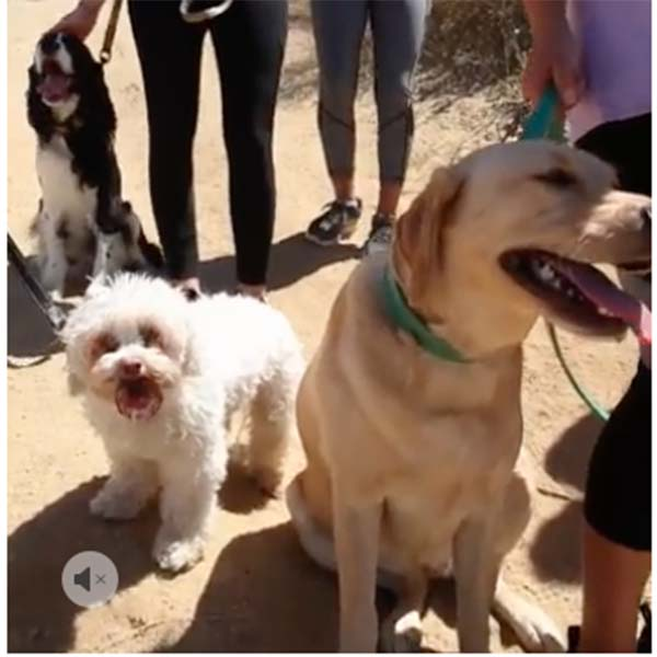 airbnb experiences of hiking Runyon Canyon with rescue dogs