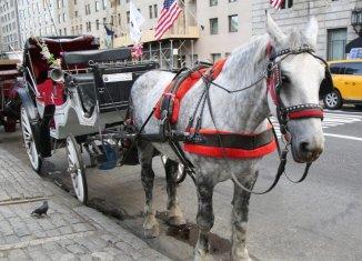 carriage ride, weird new york, weird nyc