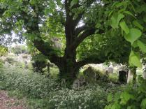 I love this tree