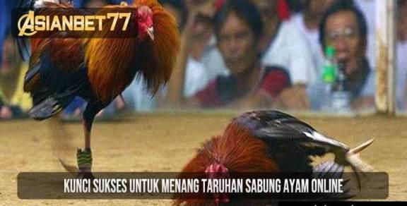 Kunci Sukses Untuk Menang Taruhan Sabung Ayam Online