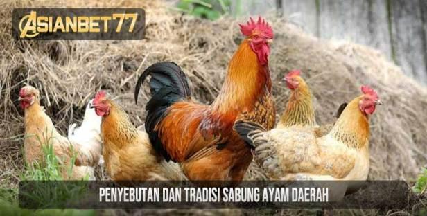 Penyebutan Dan Tradisi Sabung Ayam Daerah