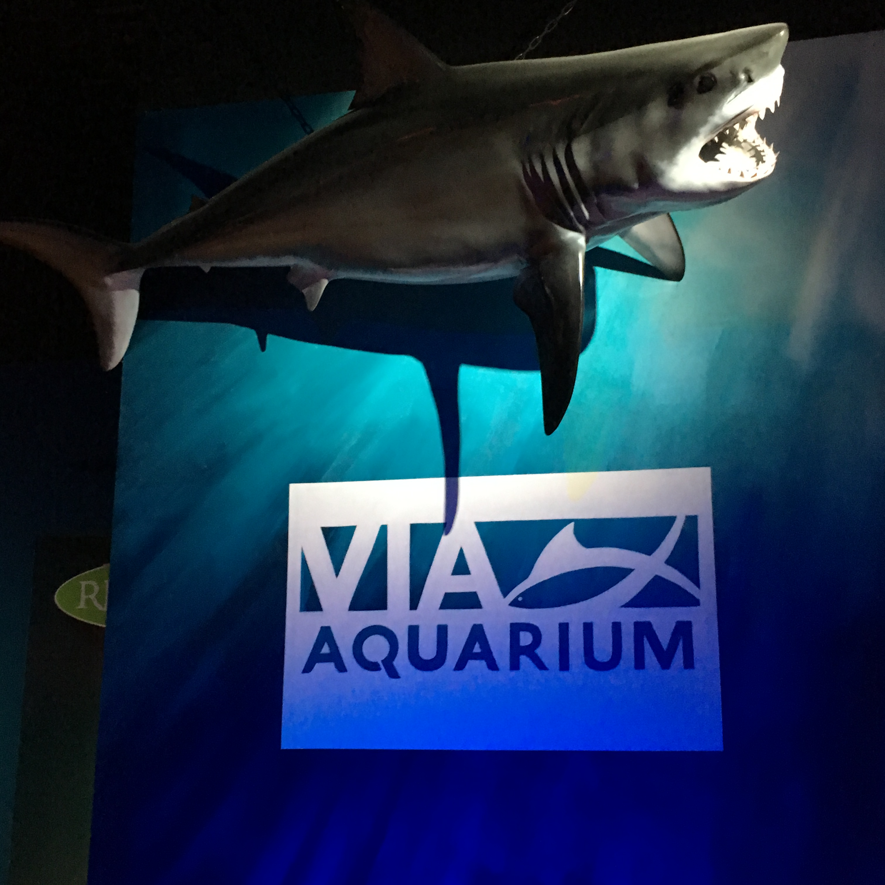 REVIEW: VIA Aquarium, Schenectady [PHOTOS]