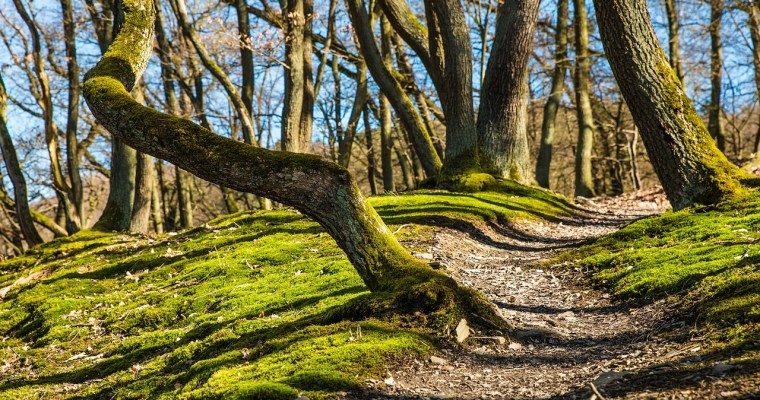 Schenectady County Starts New Hiking Challenge