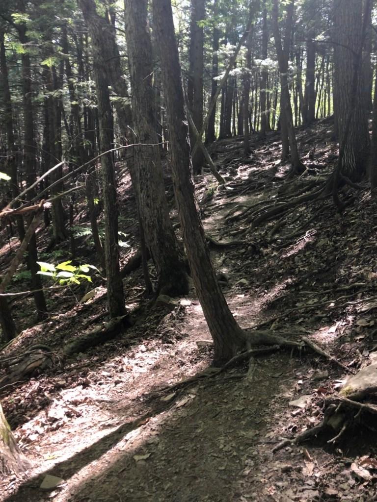 Plotter Kill Nature Preserve