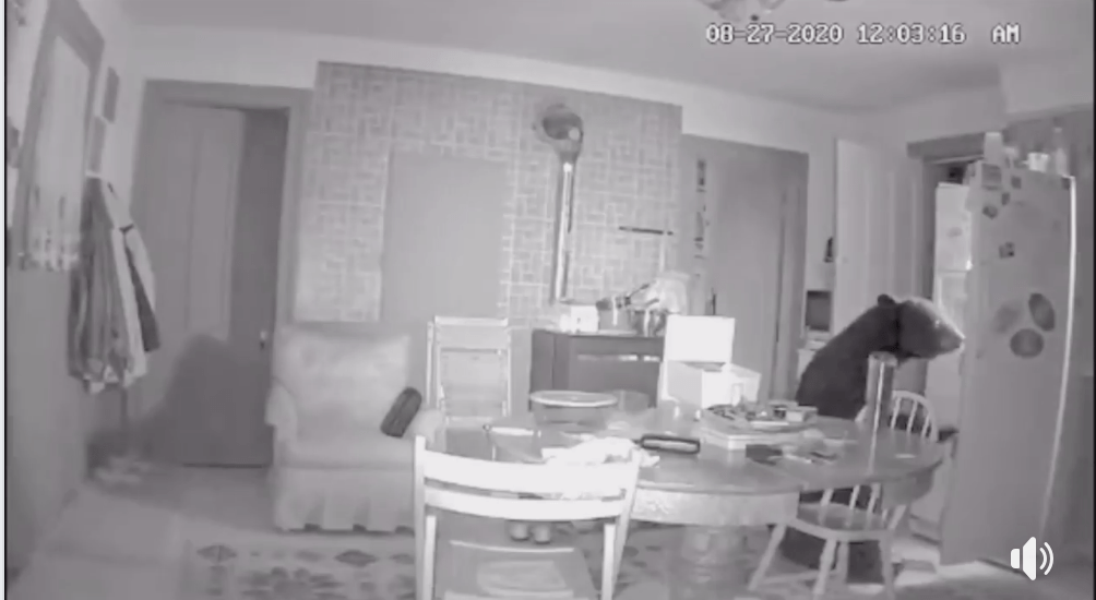 Local Bear Enters House to Find Snack [VIDEO]