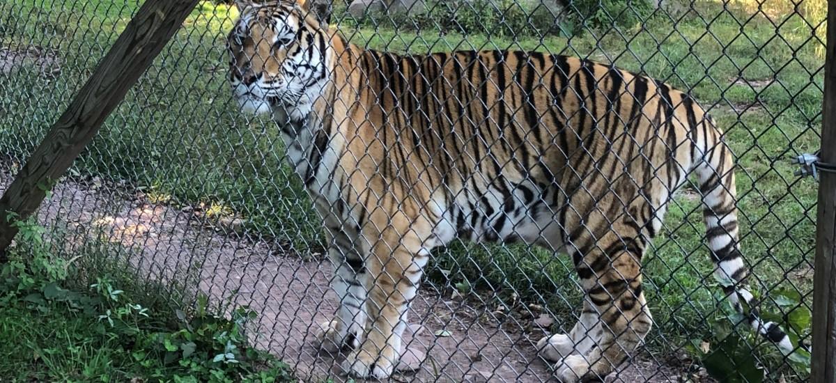 Bailiwick Animal Park and Riding Stables, Catskill