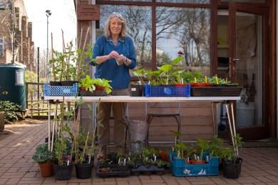 2014 KHWG Members day- garden grown plants stall